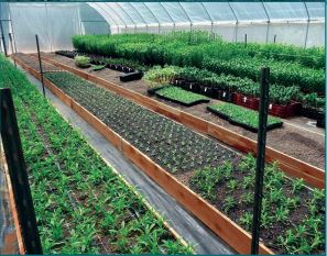 figure-580-specialty-crops-for-high-tunnel-production-in-texas