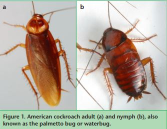Cockroach Biology And Management How To Control Them