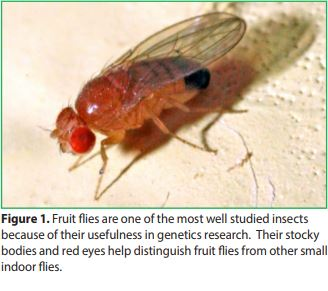 Indoor Flies And Their Control What Causes Indoor Flies